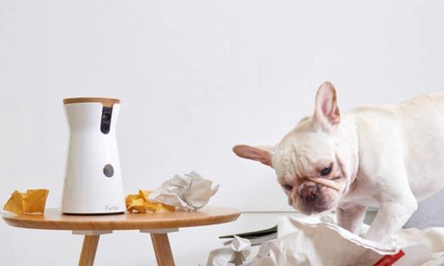 Für Hunde günstiger: Furbo HD-Kamera mit Leckerli-Ausgabe im Preis gesenkt